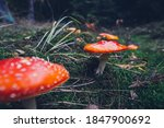 Toadstools In The Autumn Forest
