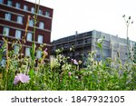Nature  Plants And Green Spaces ...