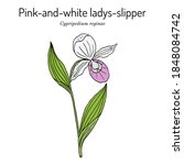 queens or pink and white ladys...   Shutterstock .eps vector #1848084742
