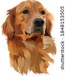 Golden Labrador Retriever Head...