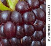 macro background of blackberry | Shutterstock . vector #184821155