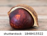 Single Buckeye Chestnut In...