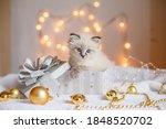 Small Cute Kitten In A Gift Box ...