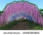 3d Rendering Of A Wisteria...