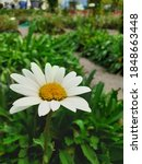 photo of white flower with...   Shutterstock . vector #1848663448