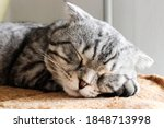 Portrait Of Sleeping Grey...