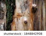 Trees. Wood Background....
