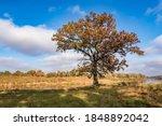 Beautiful Landscape In Oak...