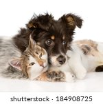Stock photo close up dog with cat together isolated on white background 184908725