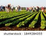 Seasonal Agricultural Field...