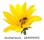 Honeybee And Yellow Flower Hea...