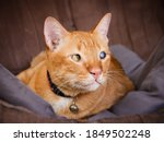 One Sided Blind Cat  Striped...