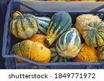 Decorative Gourds Pumpkin In...