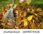 Colorful Autumn Leaves With Rake