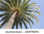 palmier | Shutterstock . vector #18499894
