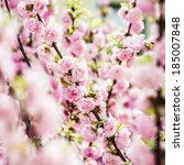 spring blossom background | Shutterstock . vector #185007848