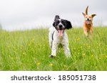 Stock photo happy dogs having fun in a field of springtime buttercups in the uk 185051738