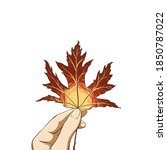 Woman Hand Holding Bright Maple ...