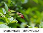 Small Grasshopper On A Red...