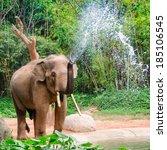 Elephant Make Water Spray  ...