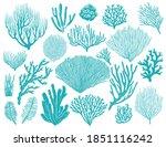 coral reef or seaweeds vector... | Shutterstock .eps vector #1851116242