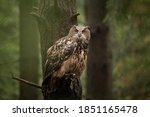 A Big Owl With Amazing Orange...