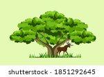 Big Wide Old Green Tree  Grass...