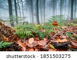 fern with fallen leaves with... | Shutterstock . vector #1851503275