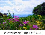 Wildflower Meadow In The...