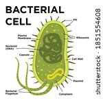 bacterial cell anatomy in flat... | Shutterstock .eps vector #1851554608
