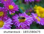 Purple Yellow Flowers And A Bee