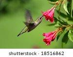 hummingbird take at st louis. | Shutterstock . vector #18516862
