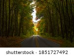Autumn Forest Trees Tunnel Road....