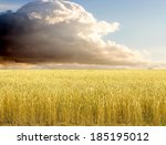 Golden Wheat Field With Blue...