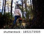 Old Man Walking Among The Trees ...