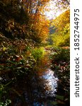 Autumn Forest Scenery With ...