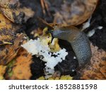 Photo Of A Slug Eating The...