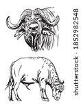 vector set of bulls isolated on ... | Shutterstock .eps vector #1852982548