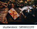 Black White Cat On Wood Table...