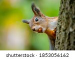A Beautiful Funny Squirrel On A ...