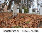 Fallen Autumn Leaves On A...