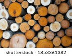 Pile Of Logs Cut From Colorful...