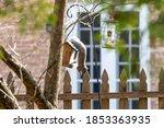 The Squirrel On The Bird Feeder