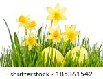 yellow flowers and easter eggs. ... | Shutterstock . vector #185361542