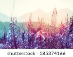 flowers at sunset with... | Shutterstock . vector #185374166