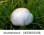 Wet Mushroom With Dew Isolated...