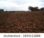 Burnt Down Grassland With Rocks ...
