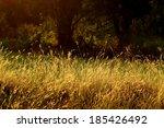 A Grass Flower On Sunrise In...