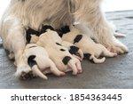 A Litter Of Little Dog Breed....