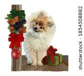 Cute Little Dog  Near A...